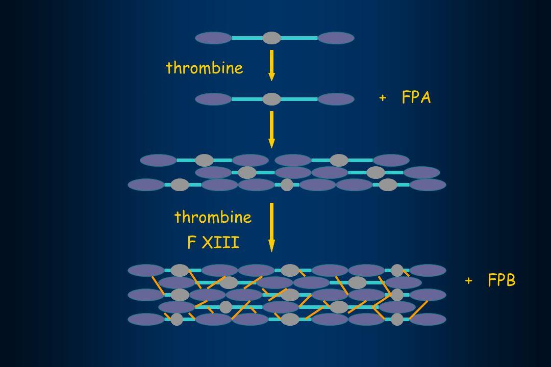 thrombine + FPA thrombine F XIII + FPB