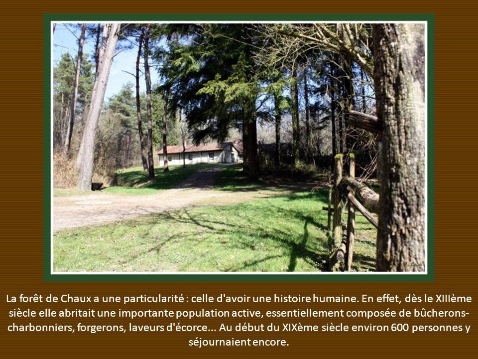 La forêt de Chaux a une particularité : celle d avoir une histoire humaine.