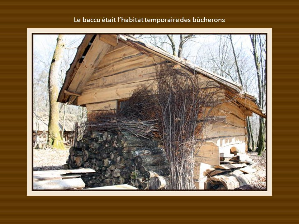 Le baccu était l'habitat temporaire des bûcherons