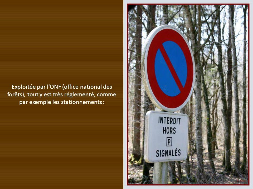 Exploitée par l'ONF (office national des forêts), tout y est très réglementé, comme par exemple les stationnements :