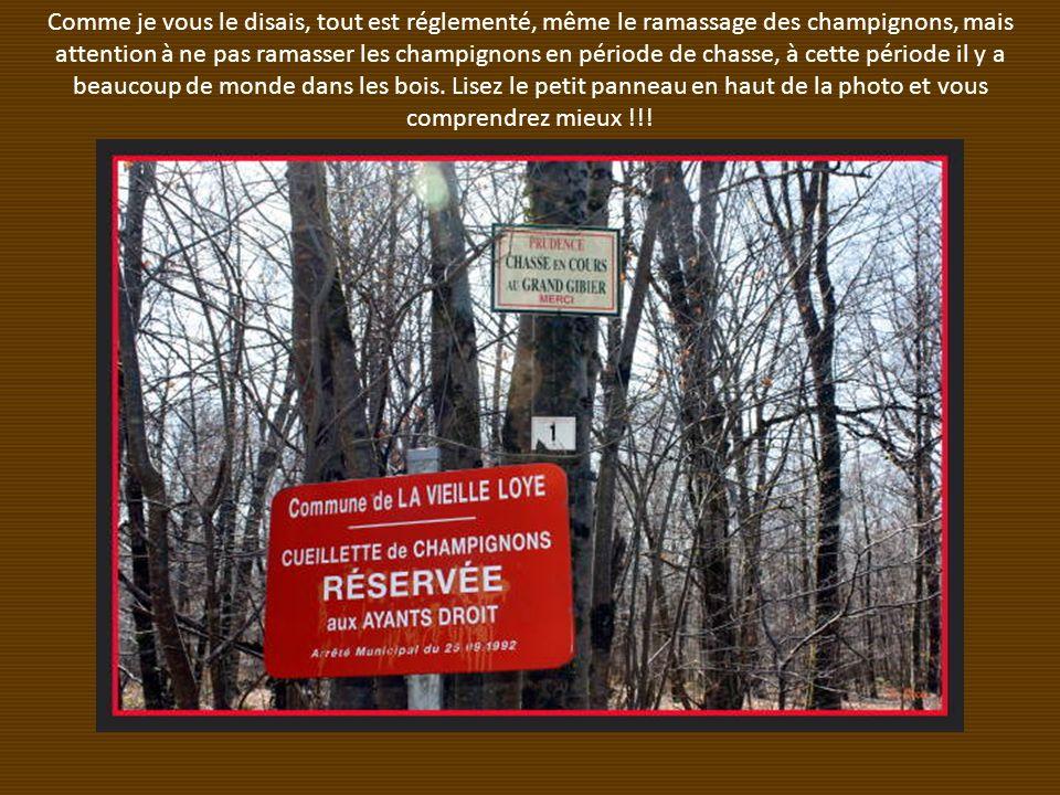 Comme je vous le disais, tout est réglementé, même le ramassage des champignons, mais attention à ne pas ramasser les champignons en période de chasse, à cette période il y a beaucoup de monde dans les bois.