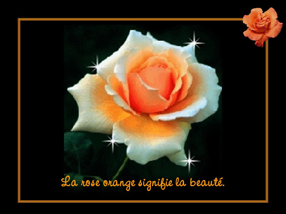 La rose orange signifie la beauté.