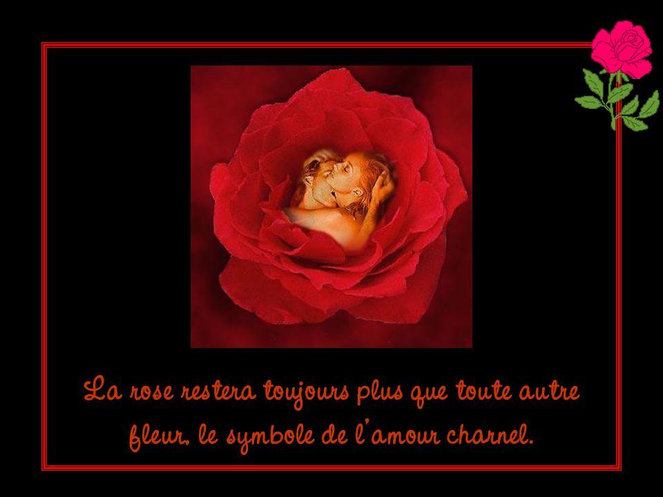 La rose restera toujours plus que toute autre fleur, le symbole de l'amour charnel.