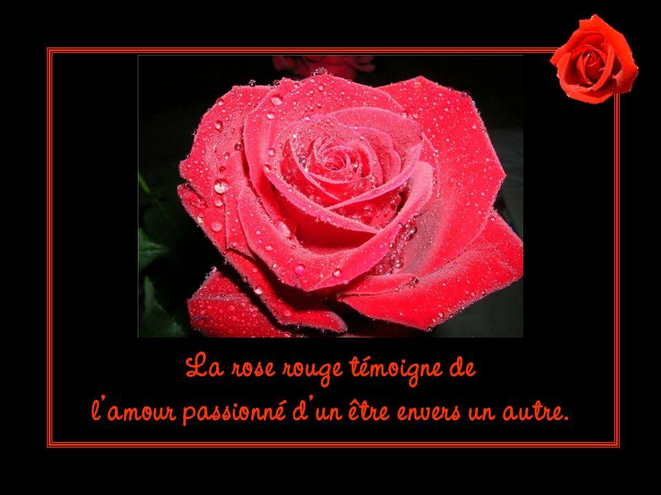 La rose rouge témoigne de l'amour passionné d'un être envers un autre.