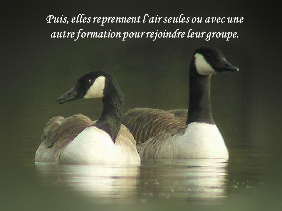 Puis, elles reprennent l`air seules ou avec une autre formation pour rejoindre leur groupe.