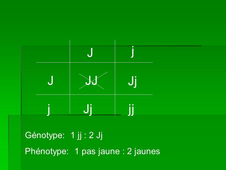 j J J JJ Jj j Jj jj Génotype: 1 jj : 2 Jj