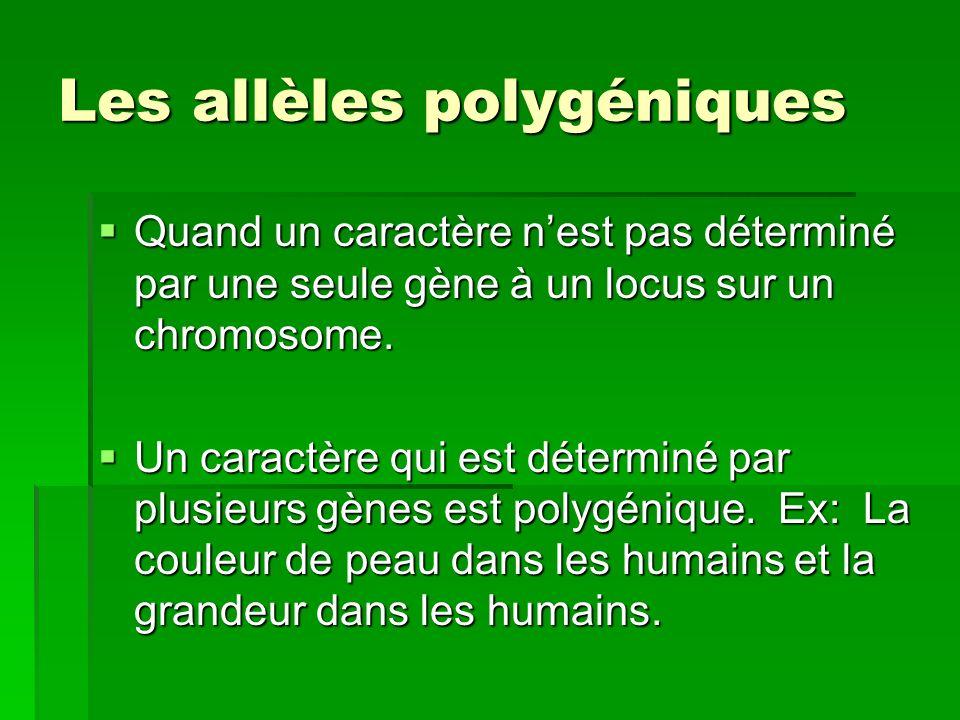 Les allèles polygéniques