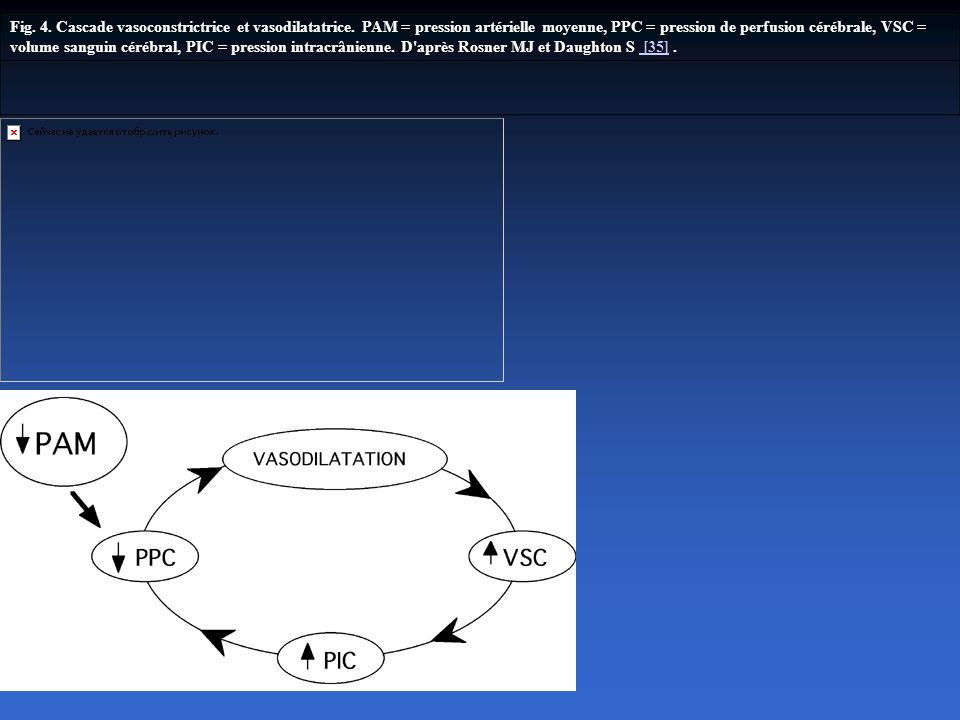 Fig. 4. Cascade vasoconstrictrice et vasodilatatrice