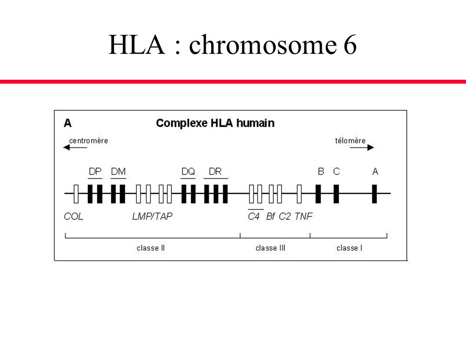 HLA : chromosome 6
