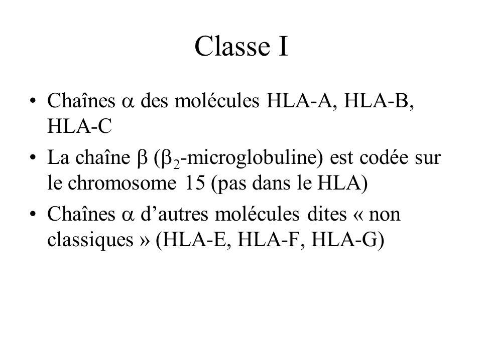 Classe I Chaînes a des molécules HLA-A, HLA-B, HLA-C