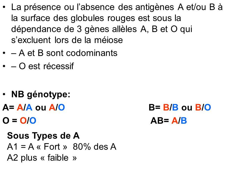 La présence ou l'absence des antigènes A et/ou B à la surface des globules rouges est sous la dépendance de 3 gènes allèles A, B et O qui s'excluent lors de la méiose