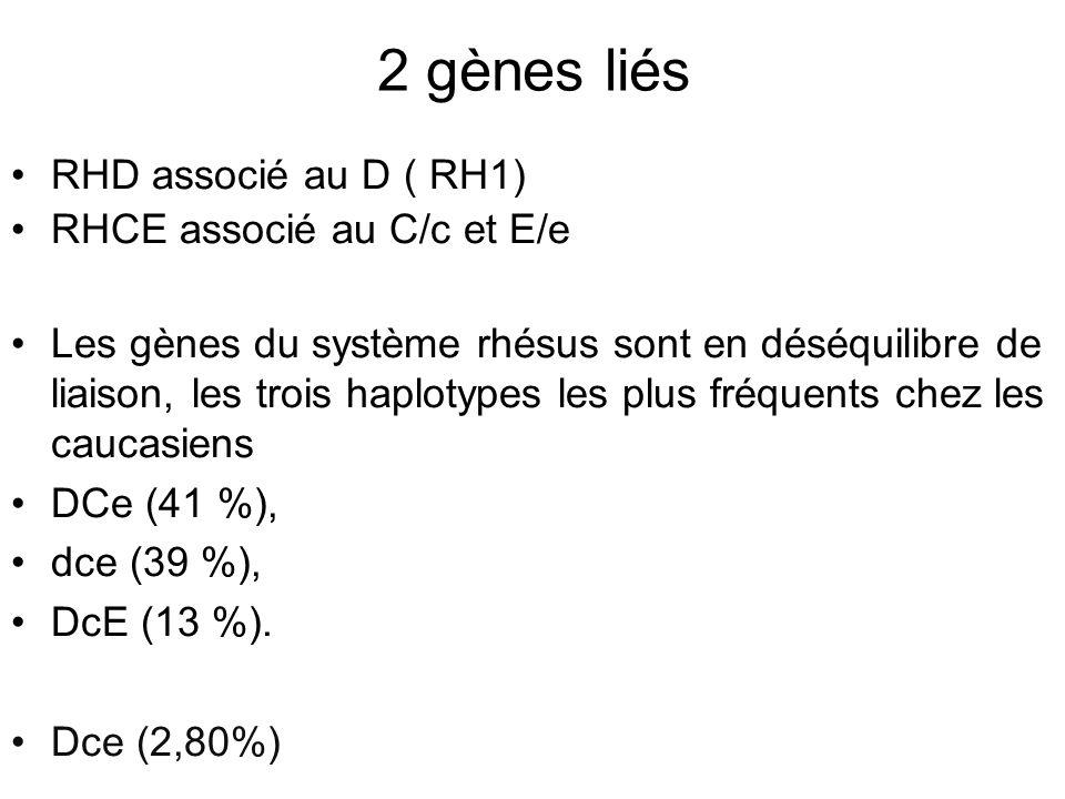 2 gènes liés RHD associé au D ( RH1) RHCE associé au C/c et E/e