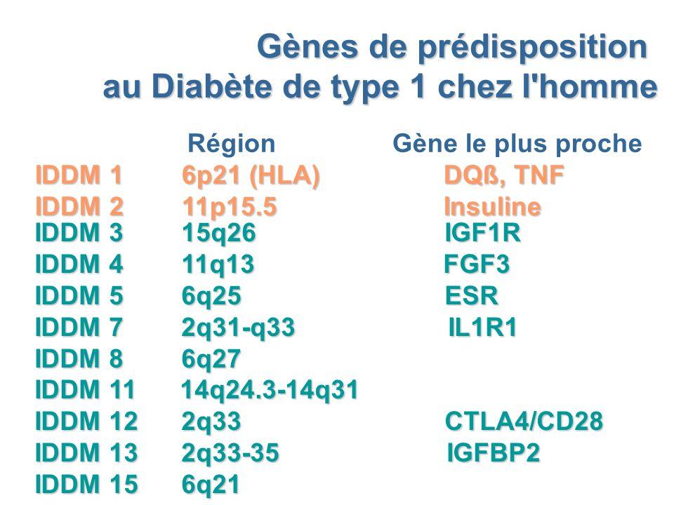 Gènes de prédisposition au Diabète de type 1 chez l homme