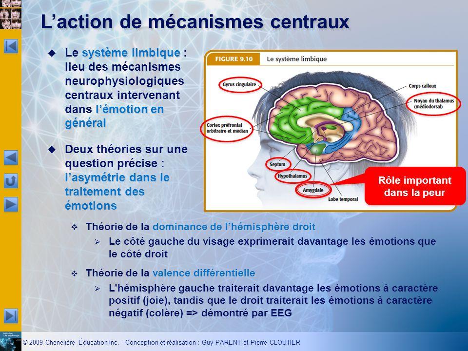 L'action de mécanismes centraux