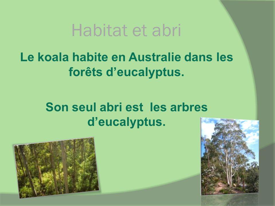 Habitat et abri Le koala habite en Australie dans les forêts d'eucalyptus.