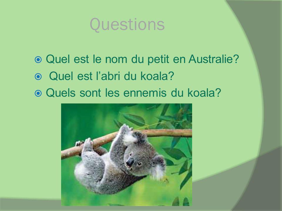 Questions Quel est le nom du petit en Australie