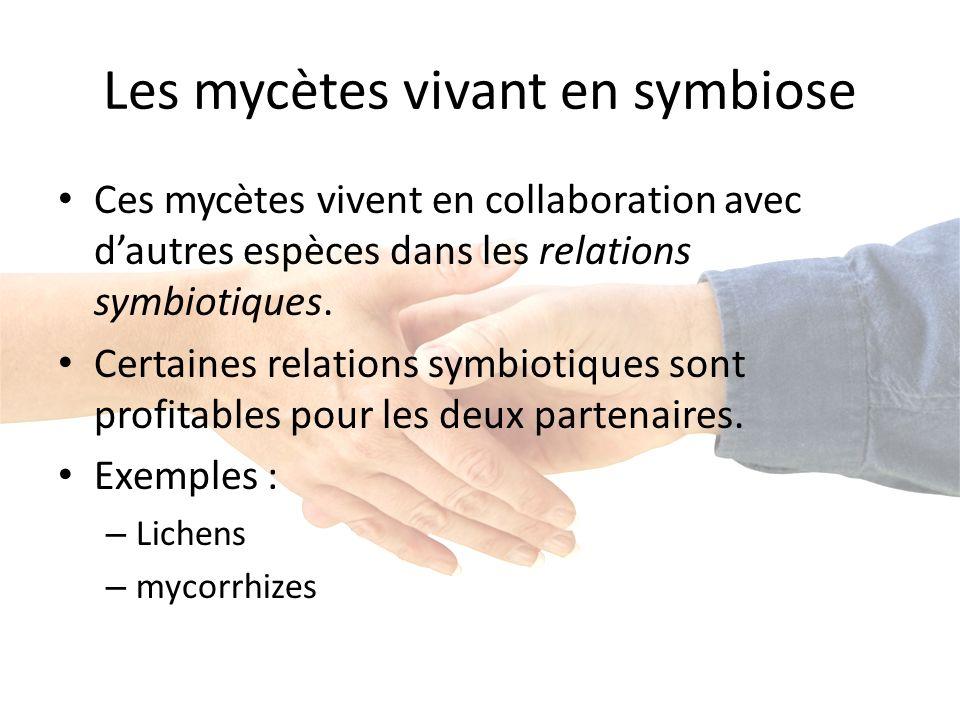 Les mycètes vivant en symbiose