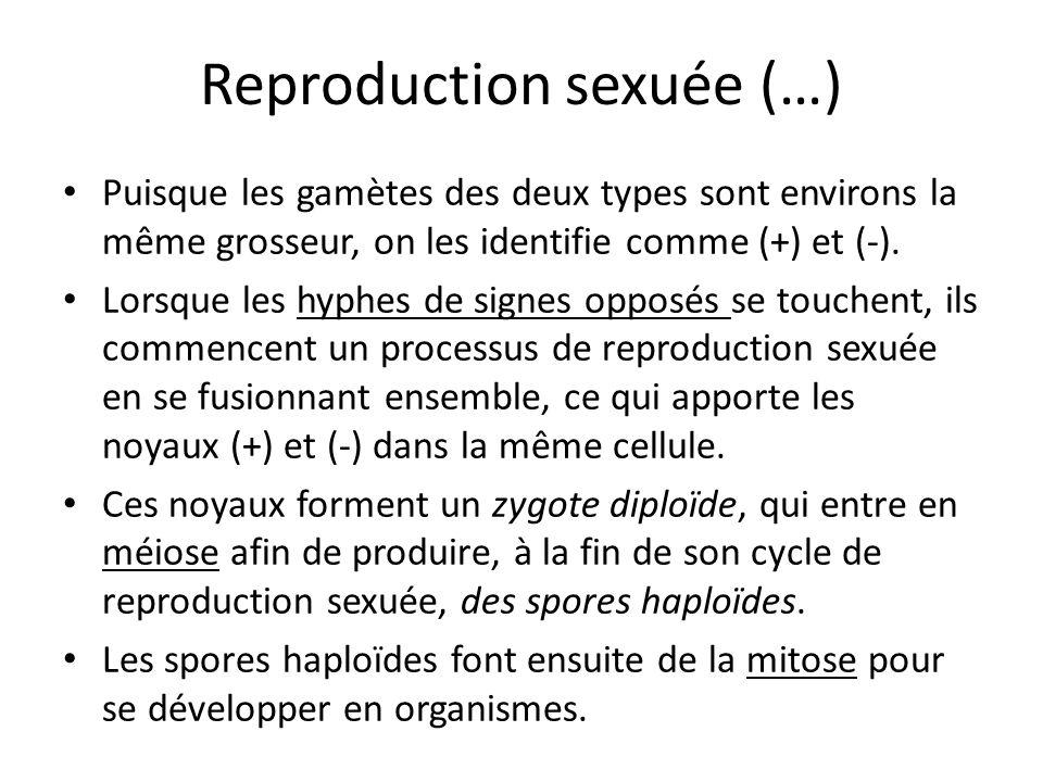 Reproduction sexuée (…)