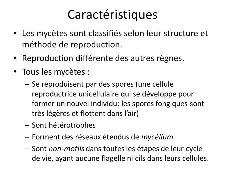 Caractéristiques Les mycètes sont classifiés selon leur structure et méthode de reproduction. Reproduction différente des autres règnes.