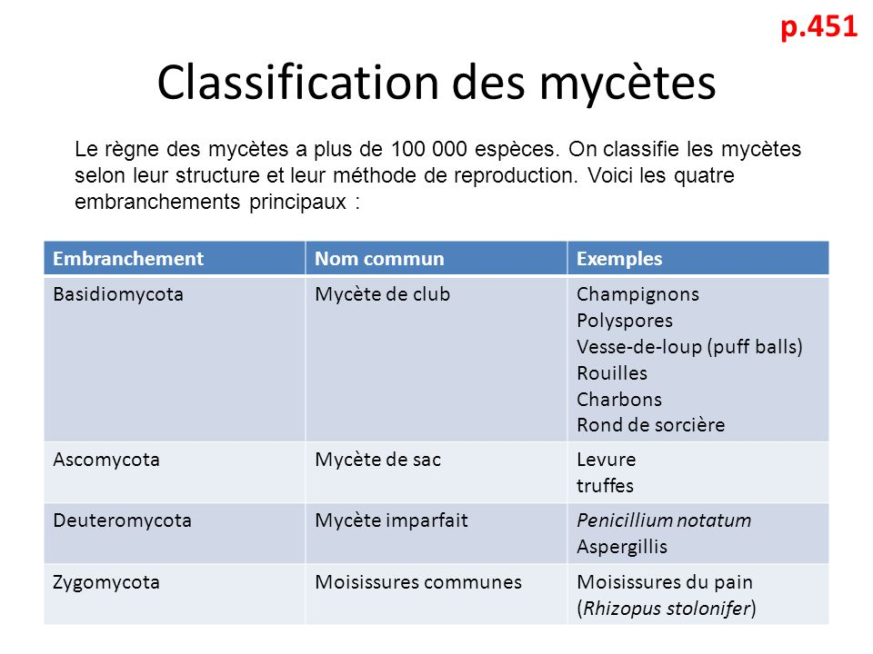 Classification des mycètes