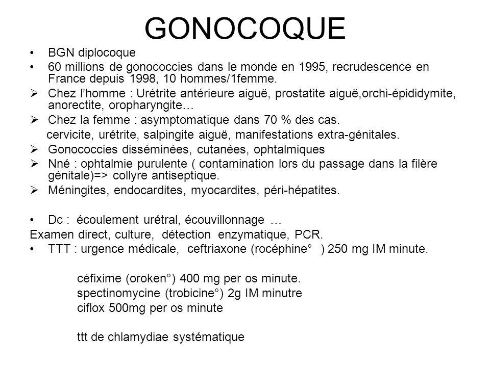 GONOCOQUE BGN diplocoque
