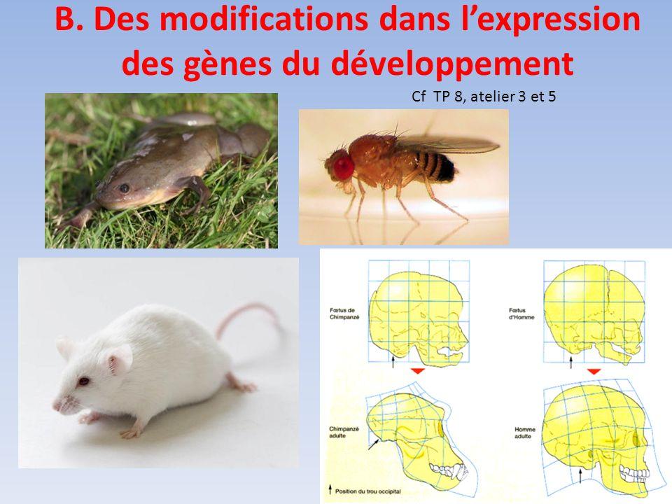 B. Des modifications dans l'expression des gènes du développement