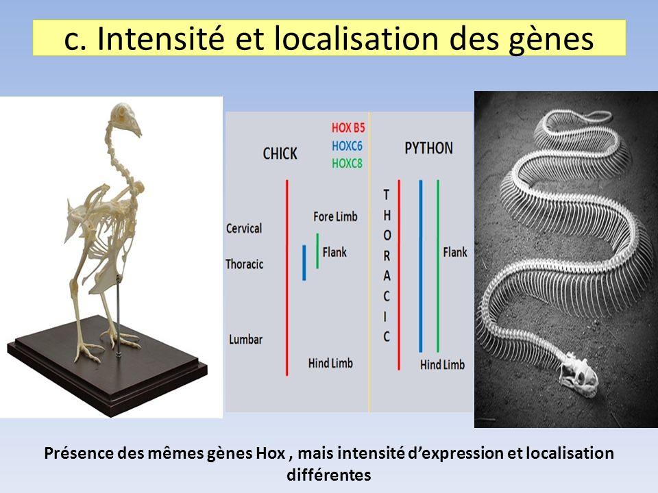 c. Intensité et localisation des gènes