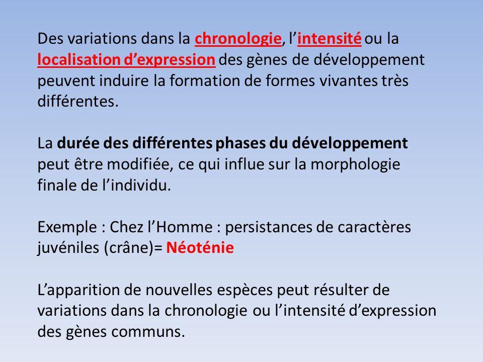 Des variations dans la chronologie, l'intensité ou la localisation d'expression des gènes de développement peuvent induire la formation de formes vivantes très différentes.