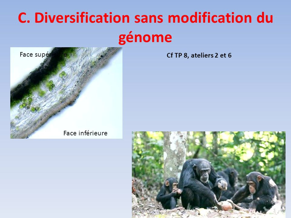 C. Diversification sans modification du génome