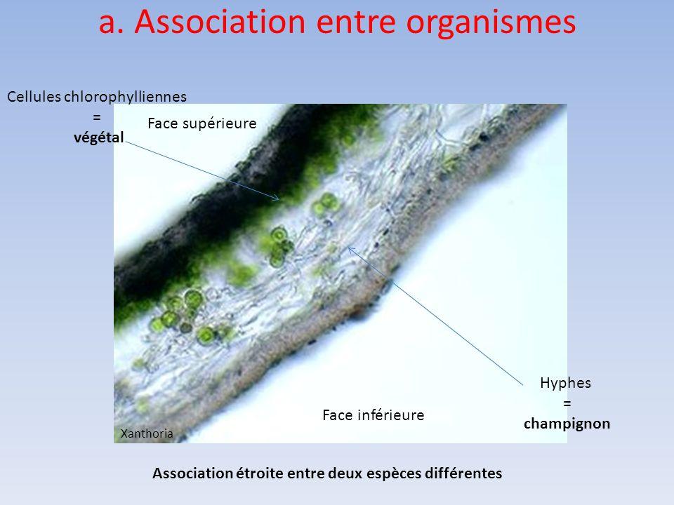 a. Association entre organismes