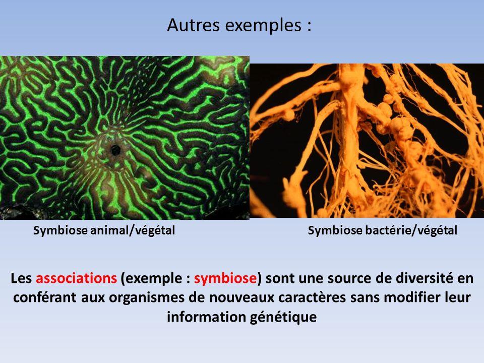 Autres exemples : Symbiose animal/végétal. Symbiose bactérie/végétal.