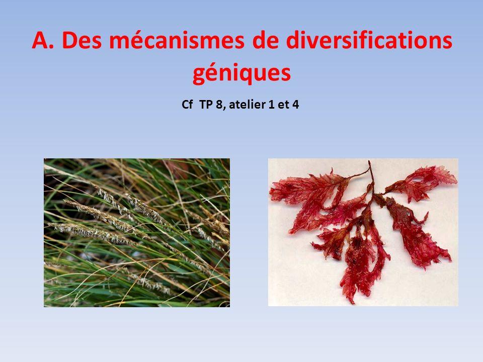 A. Des mécanismes de diversifications géniques