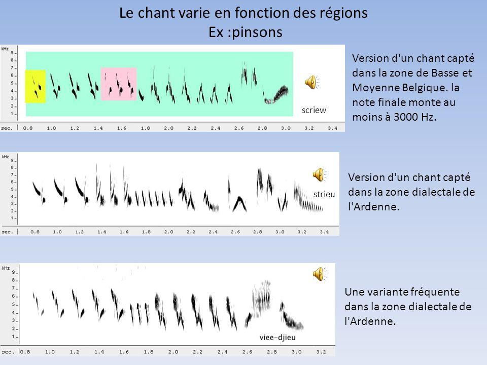 Le chant varie en fonction des régions