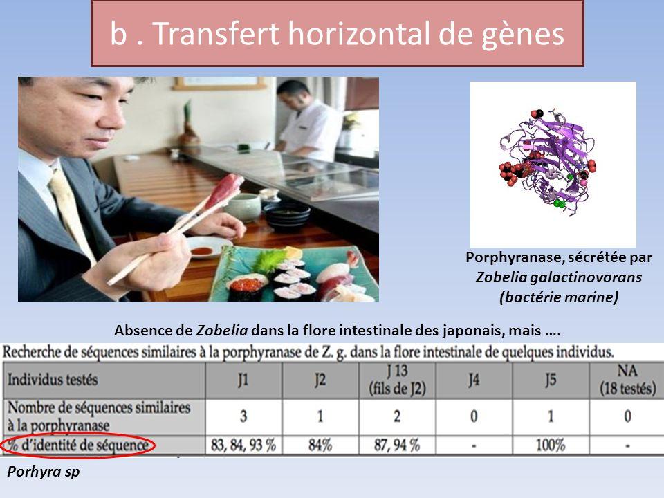 b . Transfert horizontal de gènes