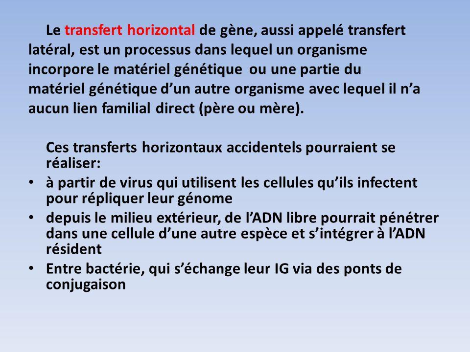 Le transfert horizontal de gène, aussi appelé transfert