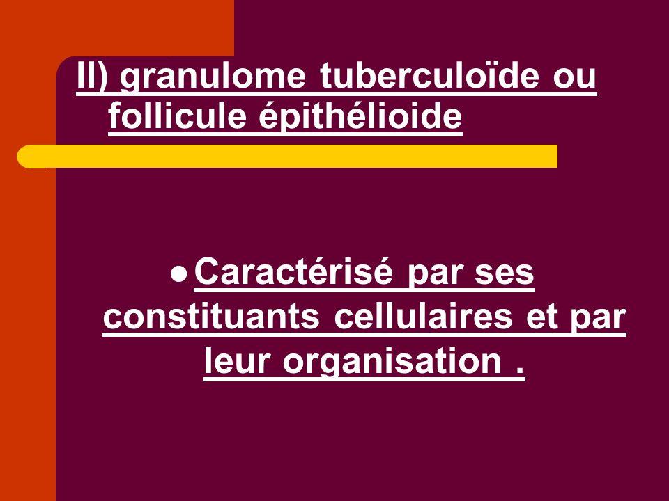 II) granulome tuberculoïde ou follicule épithélioide