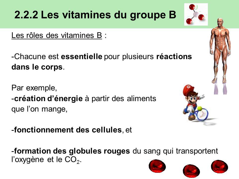 2.2.2 Les vitamines du groupe B