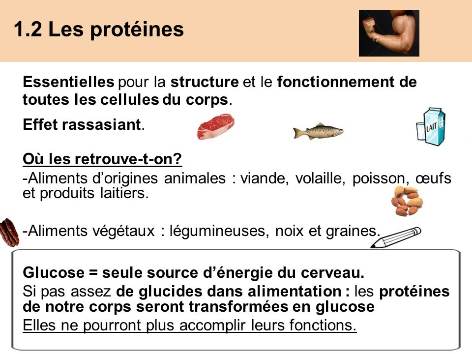 1.2 Les protéines Essentielles pour la structure et le fonctionnement de toutes les cellules du corps.