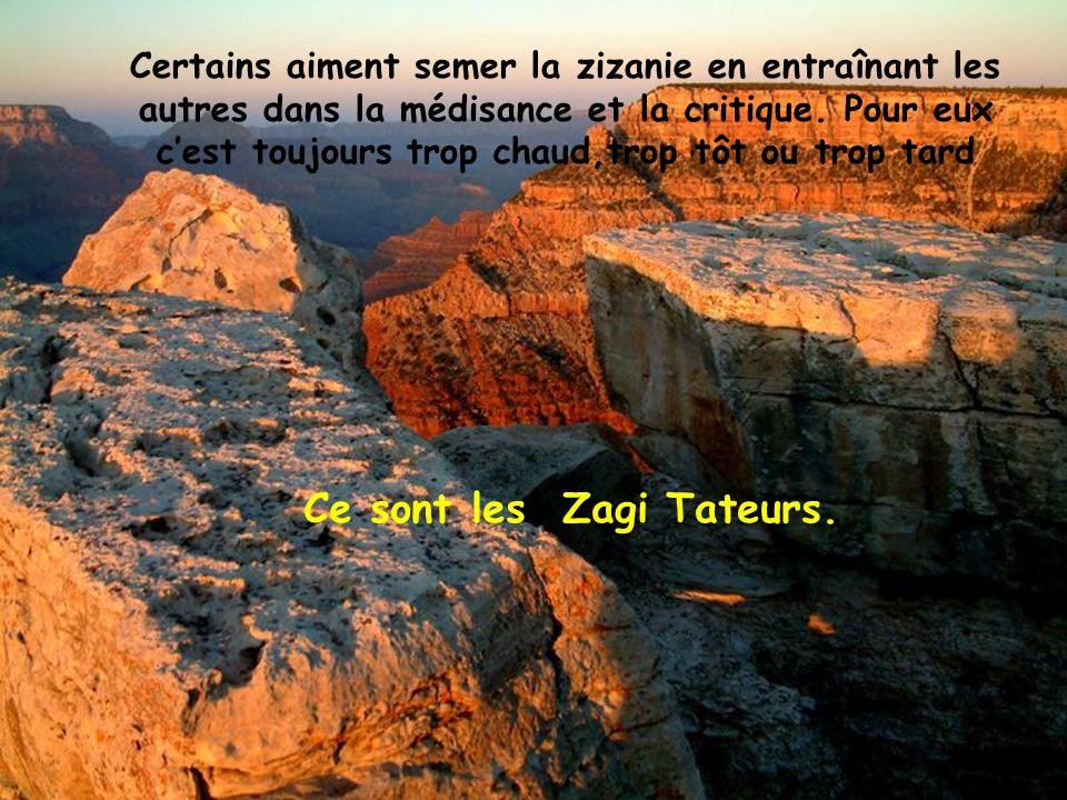 Ce sont les Zagi Tateurs.