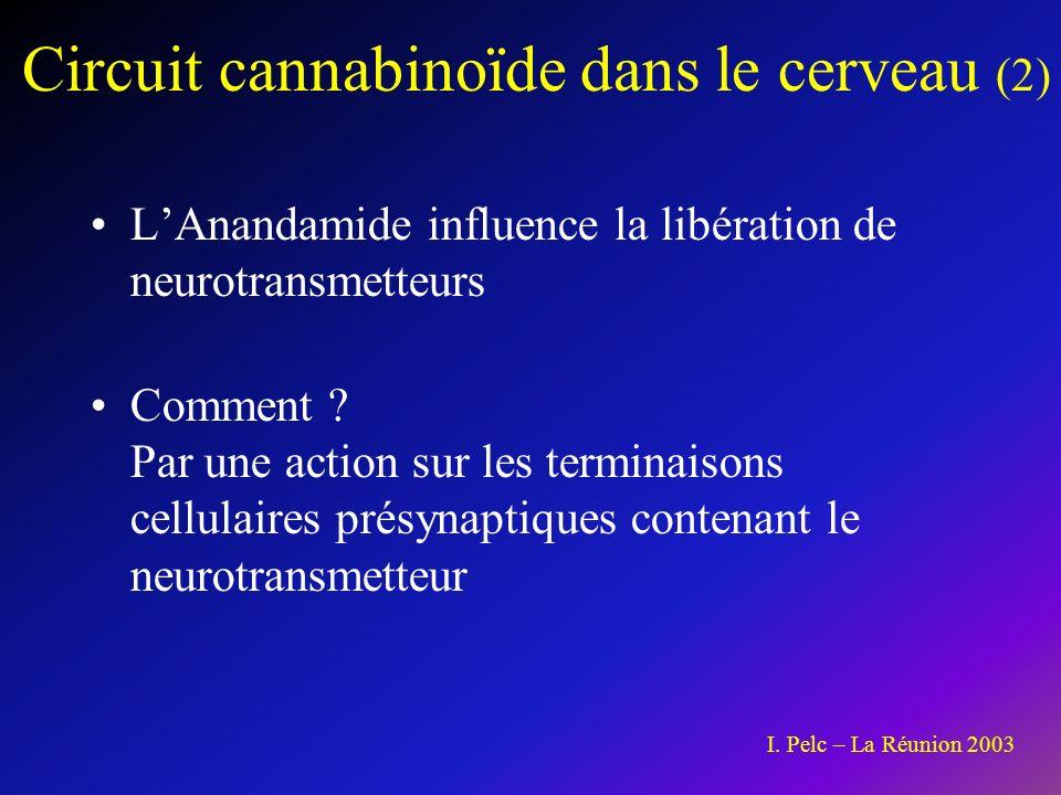 Circuit cannabinoïde dans le cerveau (2)