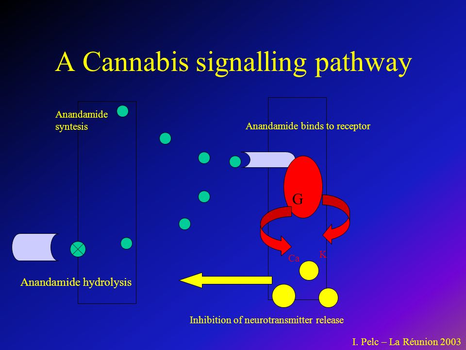 A Cannabis signalling pathway