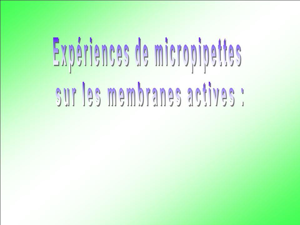 Expériences de micropipettes sur les membranes actives :