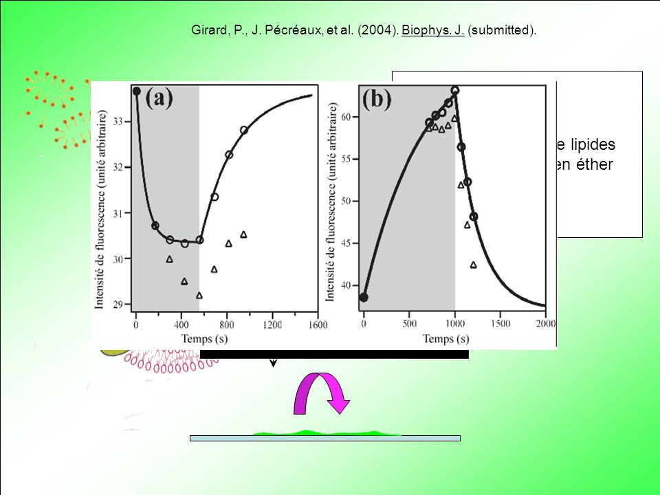 + Solution de lipides et de BR en éther H+ 200 nm