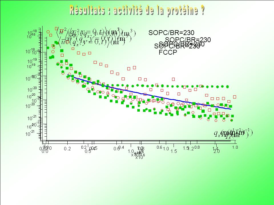 Résultats : activité de la protéine