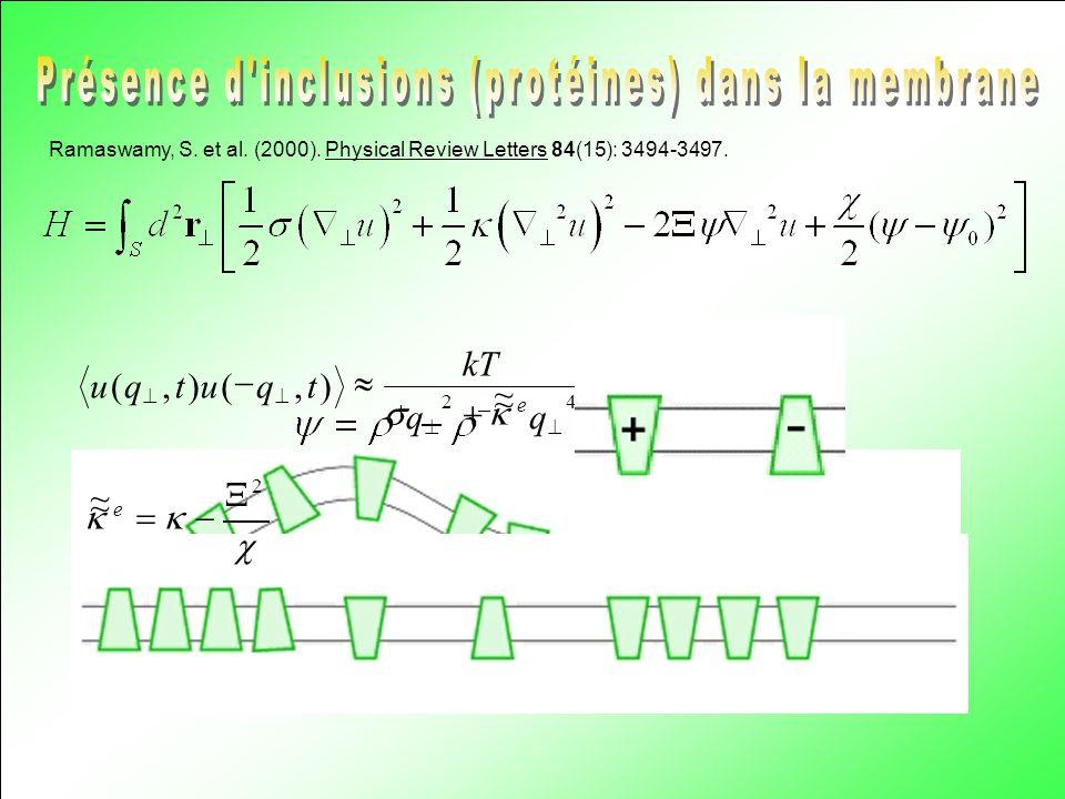 Présence d inclusions (protéines) dans la membrane