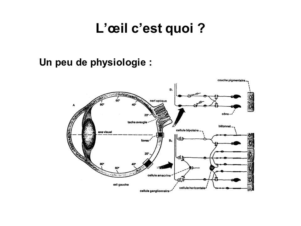 L'œil c'est quoi Un peu de physiologie :