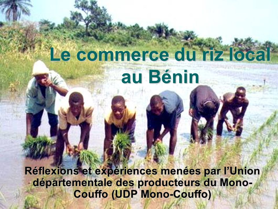 Le commerce du riz local au Bénin