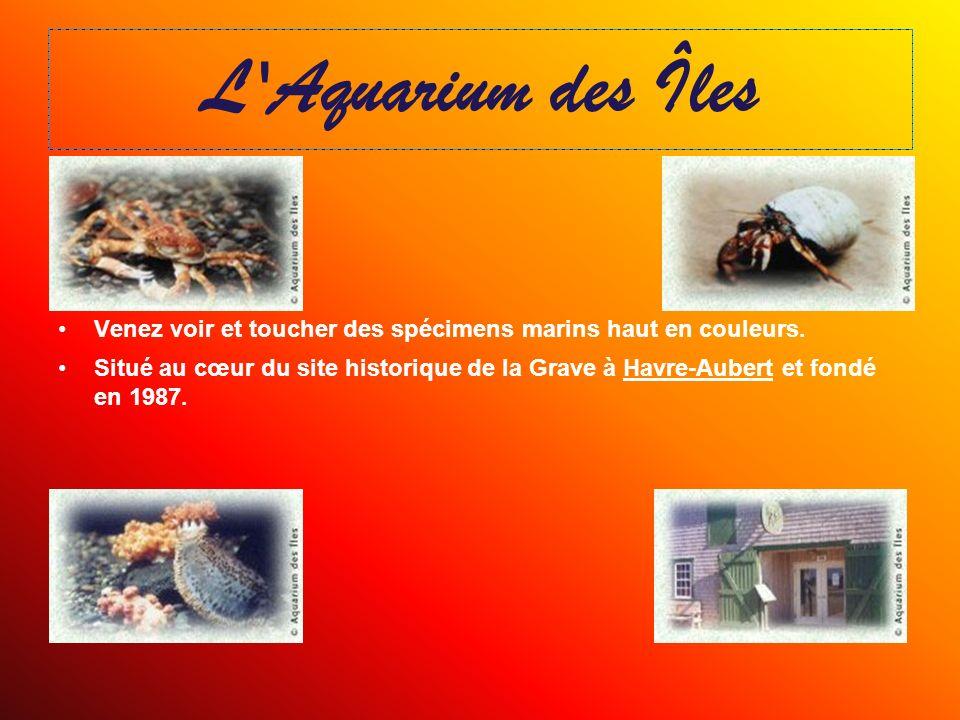 L Aquarium des Îles Venez voir et toucher des spécimens marins haut en couleurs.