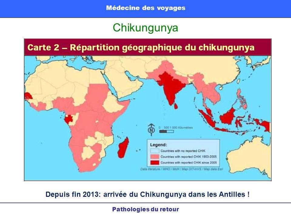 Depuis fin 2013: arrivée du Chikungunya dans les Antilles !