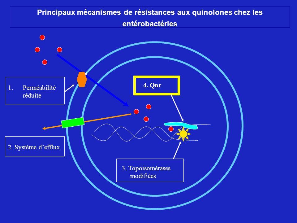 Principaux mécanismes de résistances aux quinolones chez les entérobactéries
